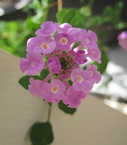 Florecilla2
